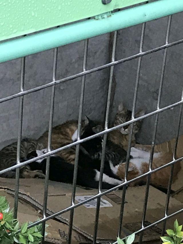 続 高層ビル裏の母猫と子猫たち