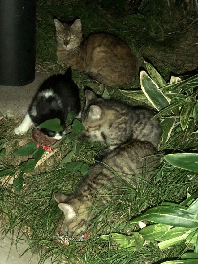 突然、母猫・子猫を発見・・・