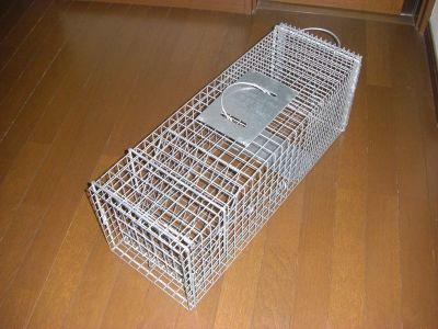 子猫保護希望のお問い合わせに返信  ~捕獲器で保護するなら