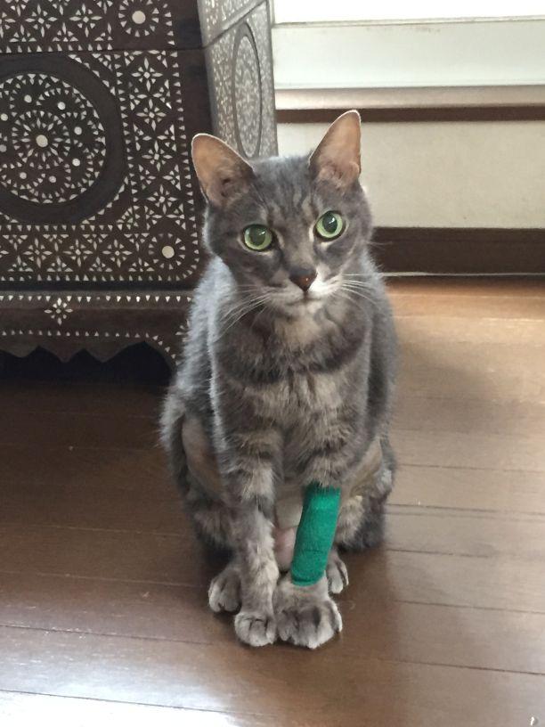 愛猫闘病記4 難しい化学療法