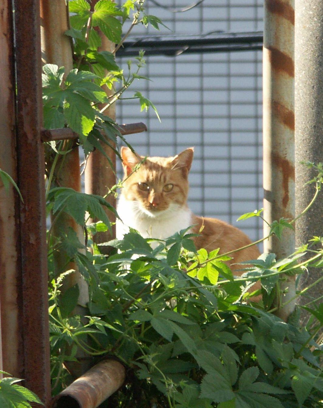 虐待事件に地域の注意を 切断された猫のしっぽを発見