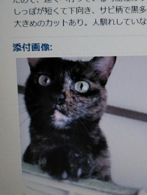 迷い猫、14日めに見つかる 家の前で捕獲器で保護