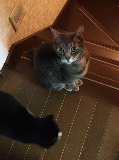 愛猫闘病記5 ジャンプ復活