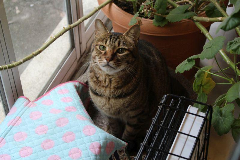 <i>表参道・地域猫サロン①</i> 都営住宅の取り壊しで難民猫が・・