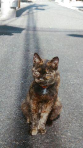 表参道・地域猫サロン⑤ 初代店長「ちょーちん」~保護活動にも貢献してくれた