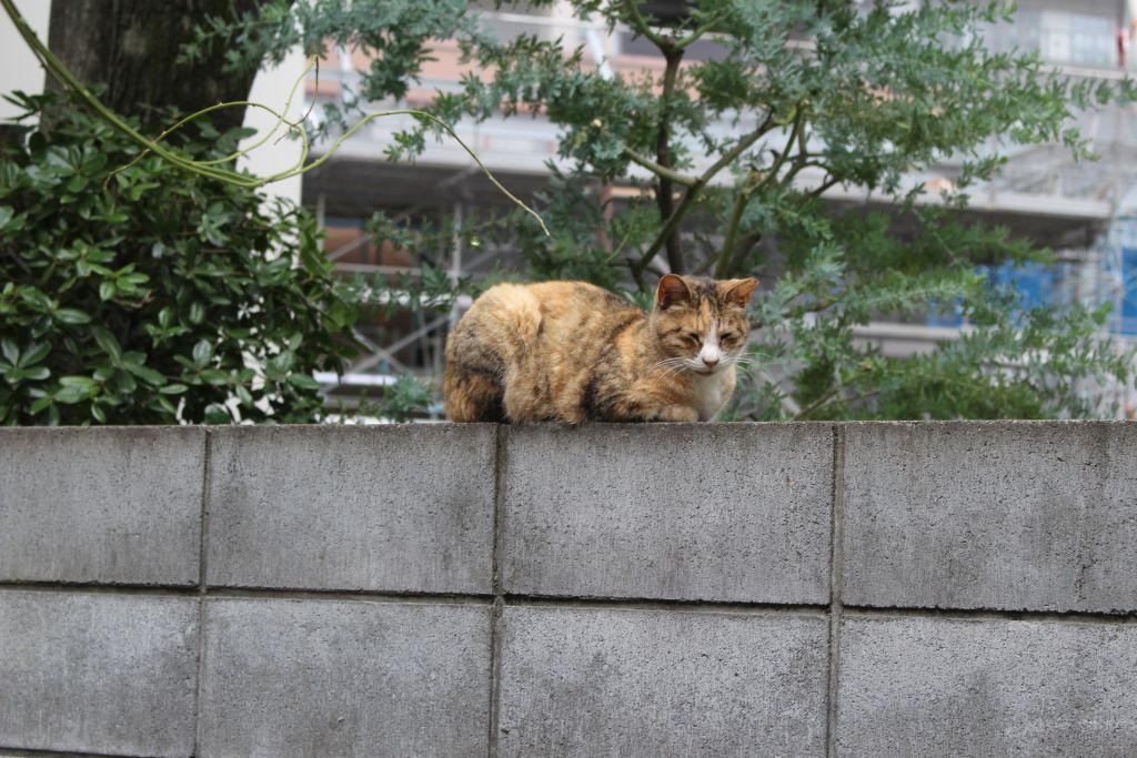 表参道・地域猫サロン⑥ 虐待で大ケガするも、低料金で手術してくれた病院