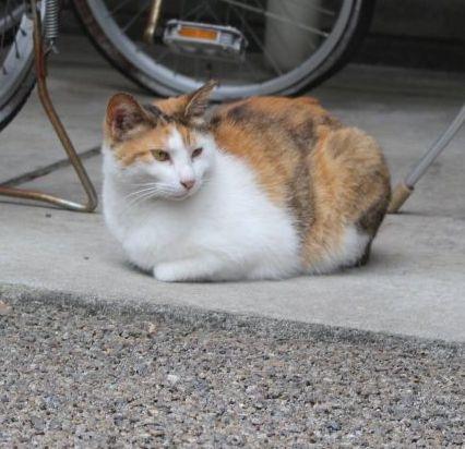 表参道・地域猫サロン⑦ ちょーちんの看取りから学んだこと