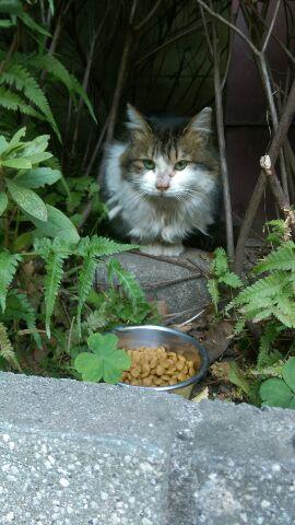 表参道・地域猫サロン「しっぽちゃん保護作戦」② また一人、しっぽの保護希望者が・・