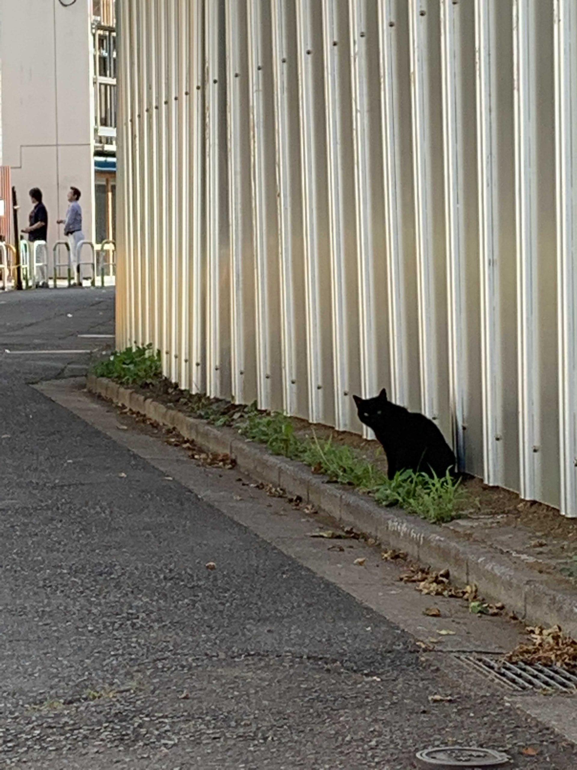 バリケード塀に戸惑う地域猫たち 閉じ込められる猫も・・