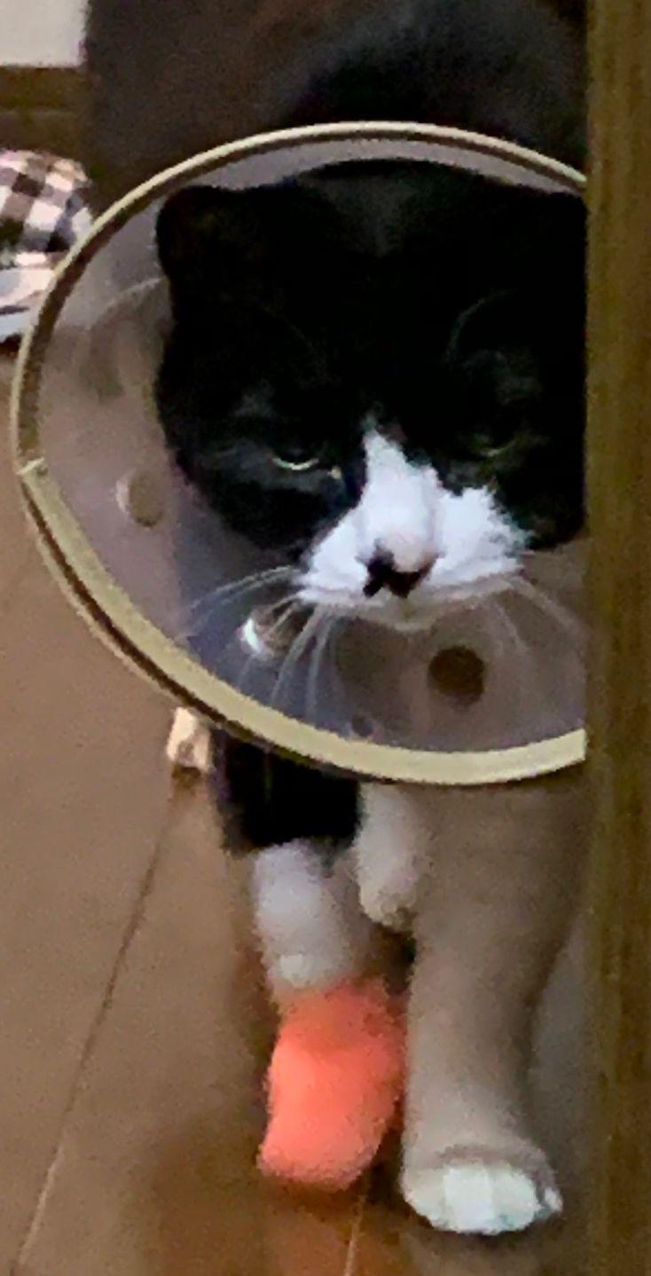 16歳愛猫ドキドキ通院記